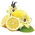 Vainilla-Limón