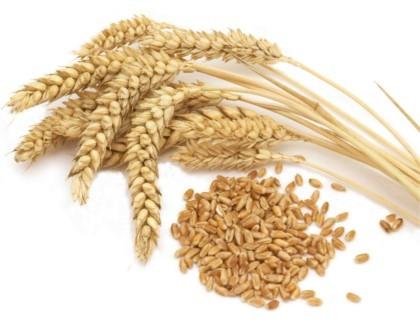 Gama de cereales ecológicos